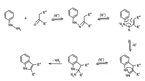 mechanism of Fischer indole synthesis