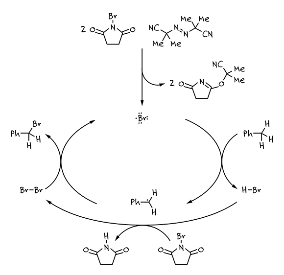 Reaction mechanism of the Wohl-Ziegler bromination